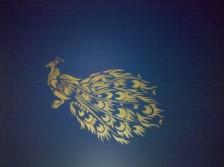 Duggal Peacock #2