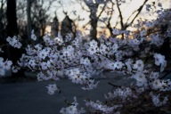 Spring in Central Park 3