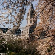 Spring in Central Park 2