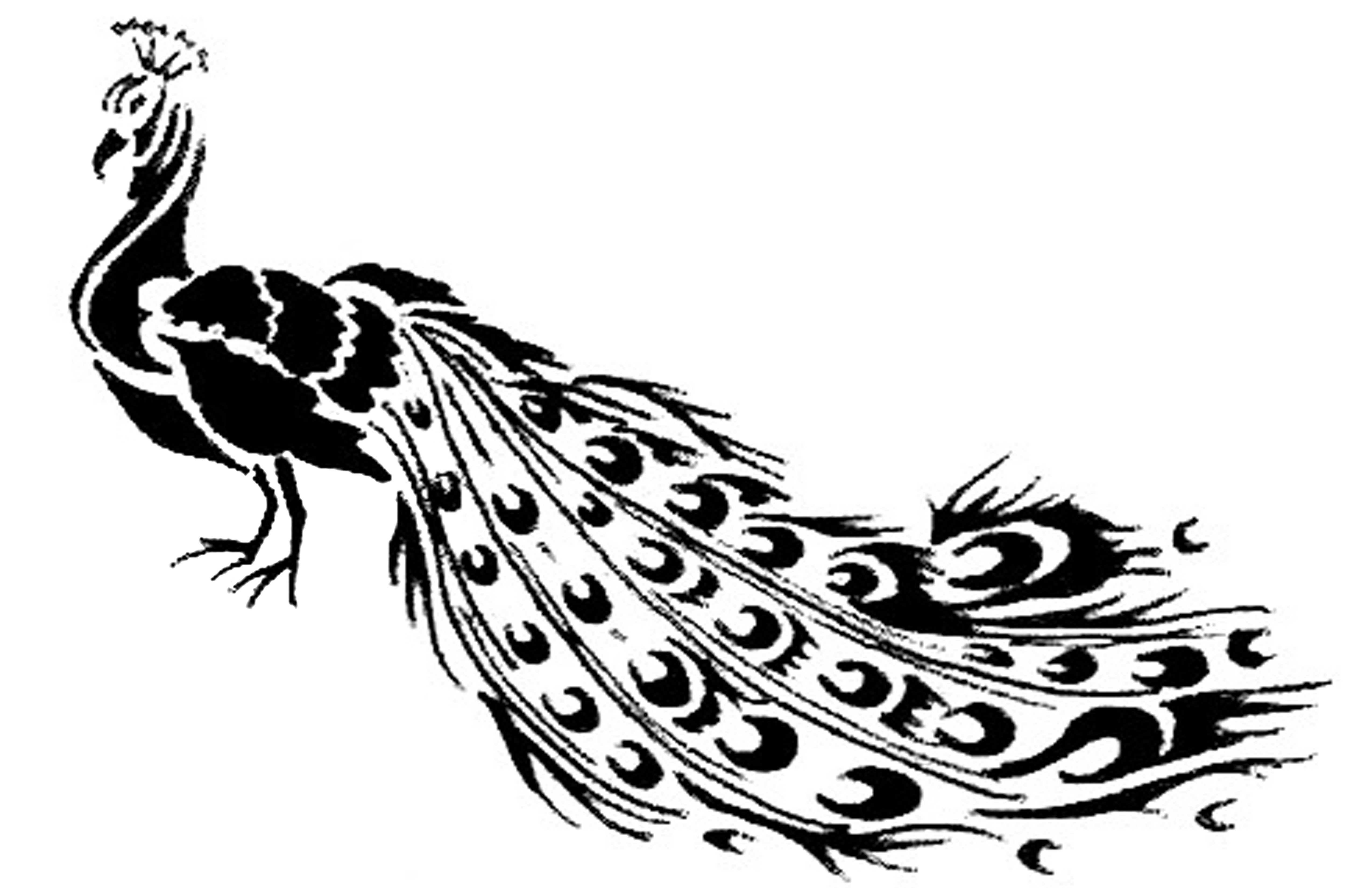 Free Coloring Pages Of Peacock Outline