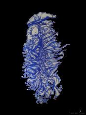 Blue China #2