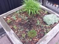 Grasses and Shrubs
