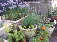 Herb Garden in Bloom